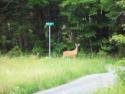 Lakeside Cottage For Rent On Lake Armington, Piermont, Nh, , on Armington in New Hampshire - Vacation Rental - Home for rent on LakeHouseVacations.com